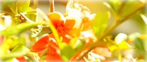 Spring spirit at Bulgaria